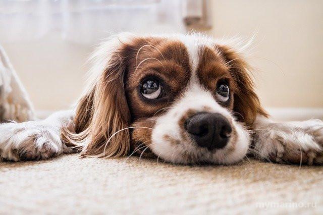 В январе в районе Марьино откроется выездной прививочный пункт для домашних животных